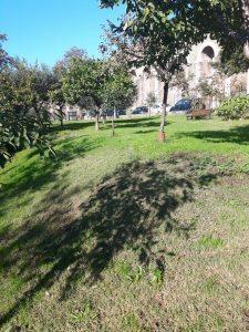 alberi-parco